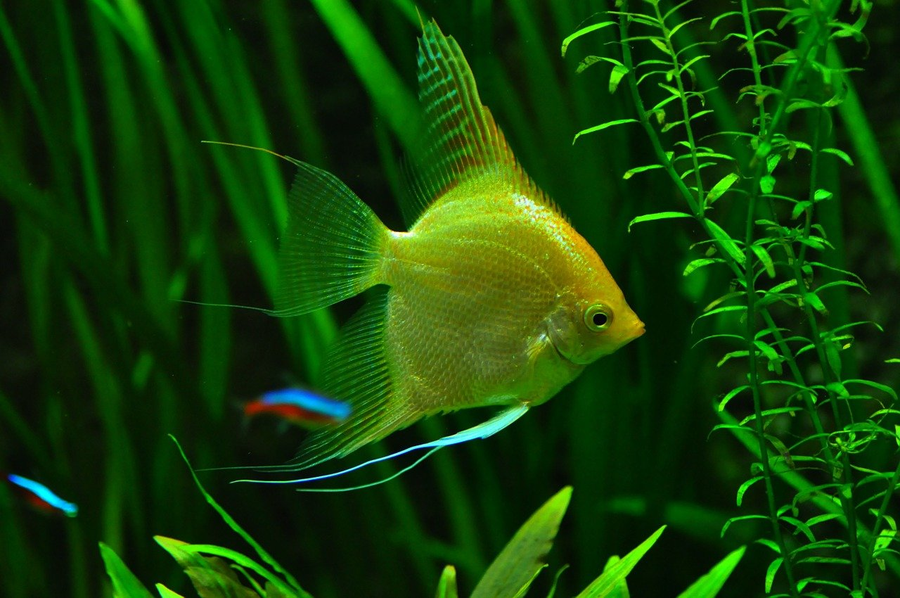 fish-936504_1280