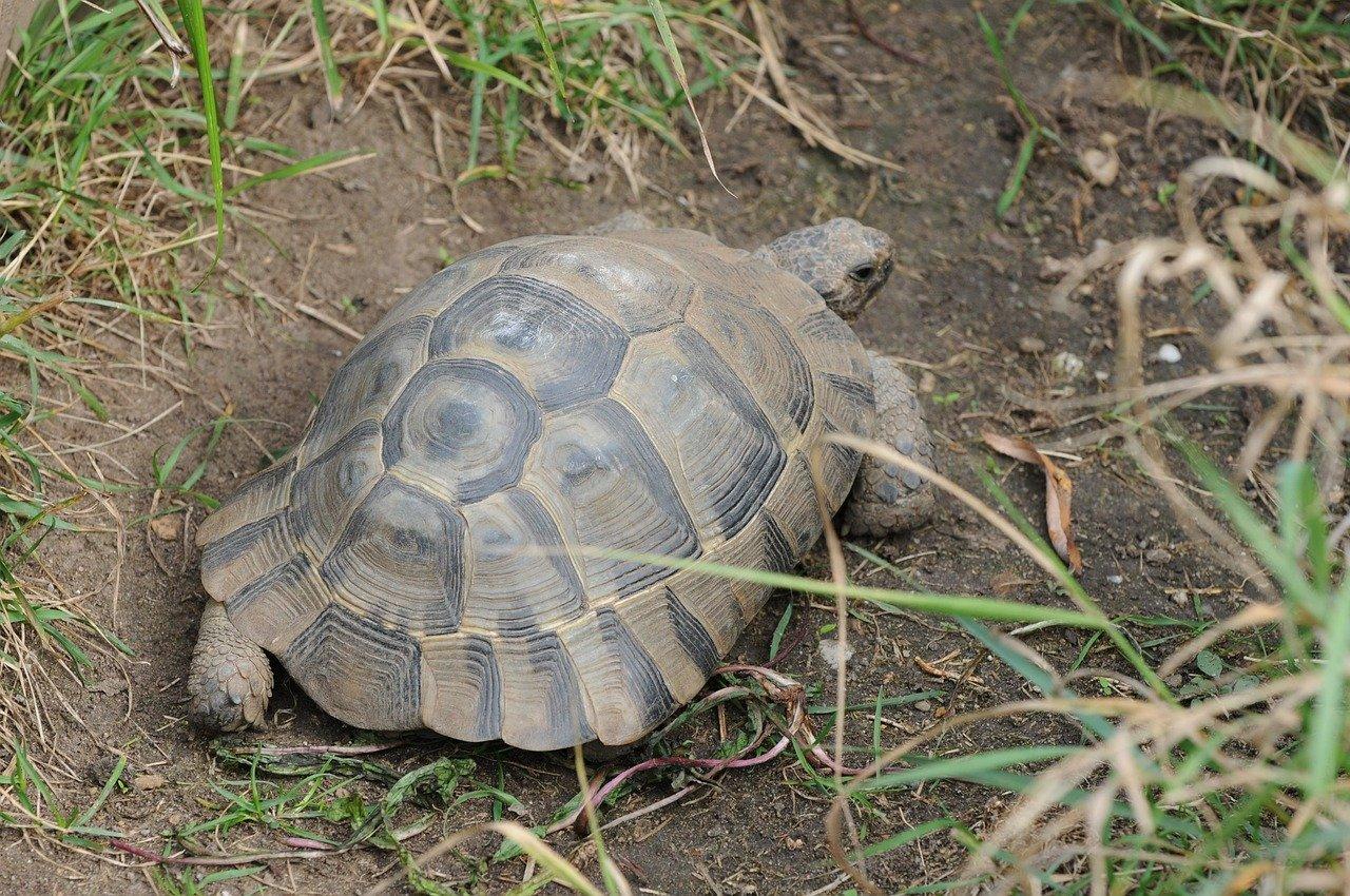 turtle-506866_1280 (2)