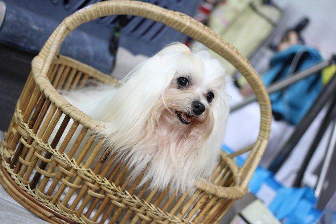 canny-dog-show-1166219_1280