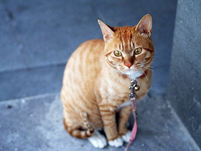 cat-360807_1280