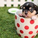 一人暮らしでも犬と暮らしたい!飼う前に知っておくべき4つの注意点