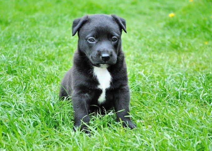 dog-280332_1280