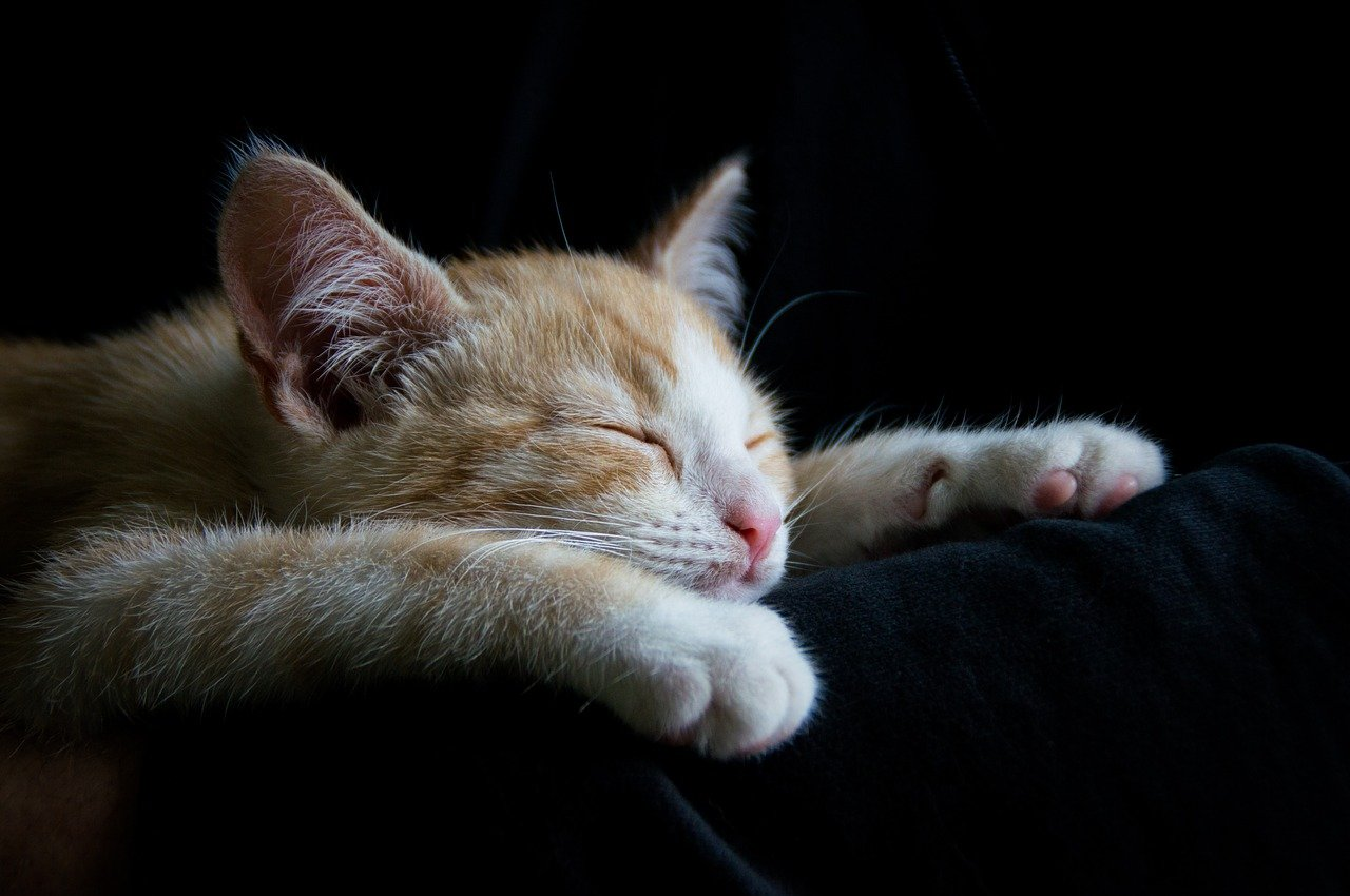 一人暮らしでも絶対に寝坊しないための6つの対策