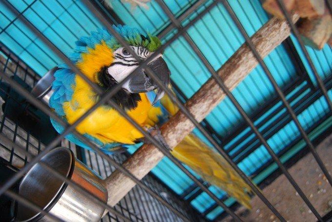 parrot-276929_960_720