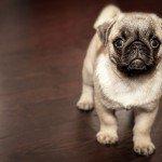 要注意!ペット可賃貸物件で発生しやすい4つのトラブル