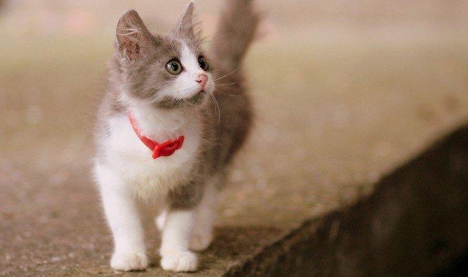 cat-1440464_1280