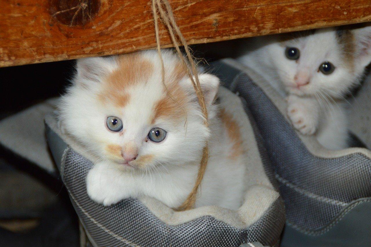 一人暮らしで猫を飼う前に知っておきたい費用と注意点
